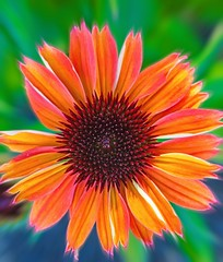 Corona (F0t0graphy) Tags: flower petal bokeh macro micro nikkor nikon canada britishcolumbia victoria floral