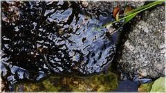 ([JBR]) Tags: reflet reflect reflejo nature naturaleza pentax pentaxart natural naturelle naturallight naturalluz pierre piedra stone rocks summer macro closeup jbz jbrphotography jbrphoto abstrait abstract abstraction abstractednature abstracted abstracto eau water agua texture textura noir negro black