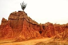 Desierto de la Tatacoa (Stefania Avila) Tags: cactus landscape nature colombia huila desierto tatacoa