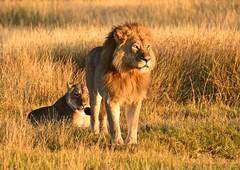 Zimbabwe 2018 - Hwange National Park (philippebeenne) Tags: afrique africa zimbabwe aniimaux animals éléphants lions oiseaux volatiles sauvage wild nature brousse bush savane