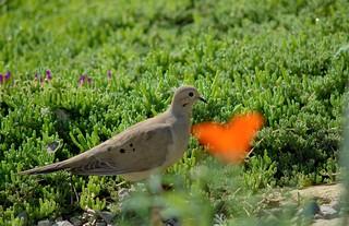 Turtle Dove Love