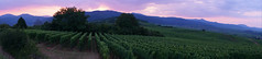 Coucher de soleil  -  Sunset (Philippe Haumesser Photographies (+ 6000 000 view)) Tags: arbres tree trees montagnes mountain mountains paysage paysages landscape landscapes panorama panoramique vignes vines vignoble vineyard vineyards coucherdesoleil sunset vosges alsace elsass france hautrhin 68 sonyilce6000 sonyalpha6000 sony 2018