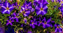 Flowers. (ost_jean) Tags: flowers longexposure nikon d5300 tamron sp af 1750mm f28 xr di ii vc ld colors ostjean