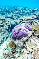 Underwater Heron Island-34 (Quick Shot Photos) Tags: australia canon canoncollective greatbarrierreef heronisland queensland underwater bogie au