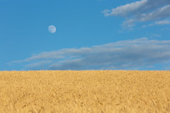 Sky - Hay - Moon (marcovannotti) Tags: nature sky moon landscape hay sunset italy tuscany