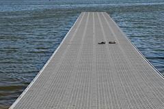 floating dock (Orest U) Tags: rowing usrowing competion skull floating dock abandoned