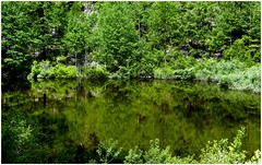 Camminando e fotografando ... (Augusta Onida) Tags: riflesso reflections lake lago rhemesnotredame valledaosta montagna mountain leicam dolomiti granparadiso park parco green verde albero tree