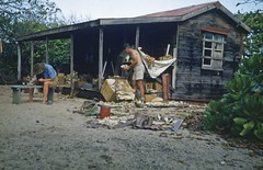 Scientists working outside an old shack on Low Island, Queensland, 1954 (State Library of Queensland, Australia) Tags: queensland statelibraryofqueensland islands lowisland shack scientificexpedition scientists greatbarrierreef