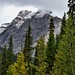 Mountain Peaks Beyond the Trees (Yoho National Park)