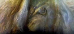 Jupiter - PJ4-103 (Kevin M. Gill) Tags: jupiter juno junocam perijove4 planetary science astronomy space