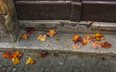 Remembering the autumn while celebrating the spring (Matjaž Skrinar) Tags: 1025fav 250v10f