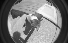 img012 (welshdude1991) Tags: lomography bw cats fisheye ilford 35mmfilm pov pointofview cars