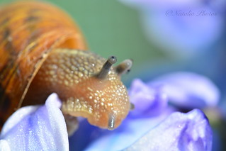 A very shy snail