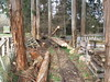 Skyline Log Loading. (Tramway Goats) Tags: skyline logging loading timbercars trees forest tramway track loadout loads