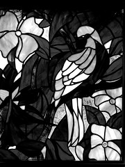 B & W Parrot Stained Glass (Mr. Happy Face - Peace :)) Tags: stained glass window art2018 7dwf theme