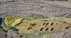 Barley harvest, Tibet 2017 (reurinkjan) Tags: tibetབོད བོད་ལྗོངས། 2017 ༢༠༡༧་ ©janreurink tibetanplateauབོད་མཐོ་སྒང་bötogang tibetautonomousregion tar dingriདིང་རི།county barleyharvest tibetannationalitytibetansབོད་རིགས།bodrigs tibetannationtibetanpeopleབོད་ཀྱི་མི་བརྒྱུདbökyimigyü barleytobereapedབརྔོད་བྱའི་ནས