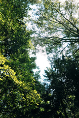 (decemberGirl.) Tags: trees green nature summer foliage