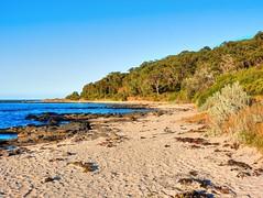 On the island VII (elphweb) Tags: hdr highdynamicrange nsw australia seaside sea ocean water beach sand sandy brouleeisland island