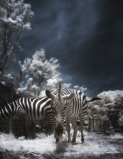 and then I saw this zebra ...