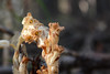 DSC_9463 (sevbette) Tags: лес осень чудесаприроды
