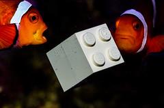 Plastic Peril (Mark Wasteney) Tags: macromondays plastic closeup macro fish marine clownfish ocean pollution earthday blueplanetii