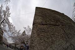 Stone wall (kaz_Pinguist) Tags: fukushima pentax k1 20180414 sakura sigma fisheye 15mmf28