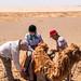 camels-noel-2716