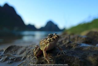 Paddy Frog Phong Nha