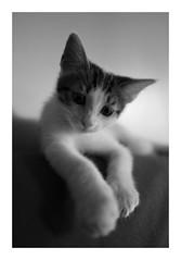 Max (DavidB1977) Tags: fujifilm x100f chat cat monochrome bw nb