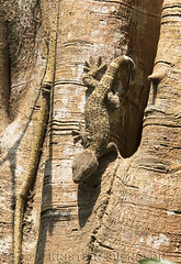 Tokay Gecko (Gekko gecko) (macronyx) Tags: nature wildlife india assam kräldjur reptile reptiles reptiler reptil ödla gecko tokaygecko gekko gekkogecko
