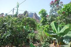 Канарський сад-город, Гомера, Канарські острови  InterNetri  0675