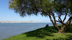 077-April'18 (Silvia Inacio) Tags: cacilhas almada portugal lisbon lisboa riotejo tejo rio river tagus tagusriver tree árvore