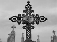 graves (Paul Lundberg) Tags: mamiya645 sekorc150mmf35 shanghaigp3100 kodakhc110 epsonv550 film cemetery 645