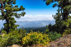 La Palma (Hans van Bockel) Tags: 1680mm d7200 hansvanbockel holiday lapalma nikkor nikon oceaan transavia vakantie isladelapalma canarias spanje es wolken clouds wood bos dennen landschap landscape roque de los muchachos