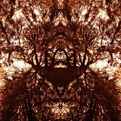 Soul of the Forest (luci_smid) Tags: trees branches forest monochrome mystery graphics impression imagination abstract abstraction shapes symbol