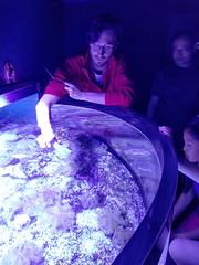 20180526_170034 (giltay) Tags: aquarium keeper feeding jellyfish cassiopea