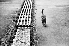 PENTAX ME  AUS JENA f3.5/135 FOMA 200 XTOL (Leinik) Tags: pentax me aus jena f35135 foma 200 xtol cat gato blanc noir bw black white blanco negro bianco nero chat