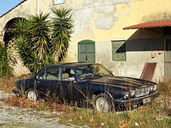 1984 Jaguar Xj6 Sovereign 4.2 (Alessio3373) Tags: abandoned abandonment abandonedcars autoabbandonate unused unloved neglected forgotten forgottencars autoshite oldcars classiccars scrap scrapped scrappedcars jaguar jaguarsovereign jaguarxj642 worldcars