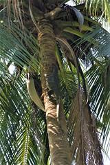 THL0334 (deandenby86) Tags: thailand phuket au nang ladyboys elephant lizard krabi karon bangkok