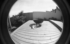 img023 (welshdude1991) Tags: lomography bw cats fisheye ilford 35mmfilm pov pointofview cars