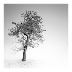 fuyu ki (ArztG.|Photo) Tags: love peace photography loveoftrees austria arztg|photo