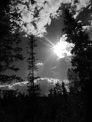 sister sun (jondewi52) Tags: nature black blackandwhite branches clouds cloud leaves forest landscape monochrome outdoors plant sky sun trees tree white woods warm
