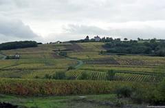 Coteaux du Layon (Fred Moresve) Tags: vigne coteauxdulayon vin anjou fujisuperia400 nikonf75 argentique