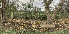 From This Scene of Confused Devastation... (SydPix) Tags: apples orchard appletrees roller garden millerskidby windmill museum heritage grass fruit tree trunk bark autumn sydyoung sydpix