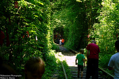 Tunnel of Love (mercuryriser2005) Tags: people trees nature railway ukraine klevan train tunnel green forest woods travel solo vacation locomotive outside exotic