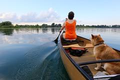 Back In Motion (deanspic) Tags: canoe canoeing paddle paddling misha gunnel 6d ef1635mm usm ef1635mmf28liiusm stlawrenceriver calm guindonpark headpond lakestlawrence back motion backinmotion wake ripple ripples reflection summer paddleon