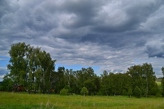 Lead and green I (МирославСтаменов) Tags: russia pushchino moscowregion slope meadow birch forest cloudscape greenery
