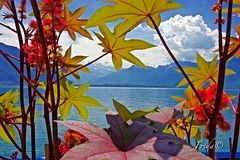 Montreux - Lake Geneva (The world in f stops) Tags: plants flowers water mountains sky clouds landscape nature montreux switzerland lake europe