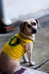 Khaleesi the Dog (claudemirribeiro) Tags: dog cute cutedog puppy