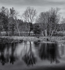 Trees in the water (Tim Ravenscroft) Tags: trees reflections lake monochrome blackandwhite blackwhite hasselblad hasselbladx1d x1d